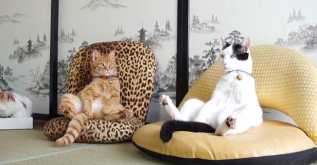 gatos-que-se-sientas-chistosos-20